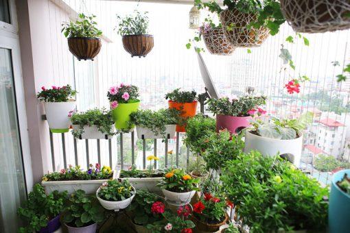 Những chậu hoa đầy màu sắc làm ban công thêm bắt mắt